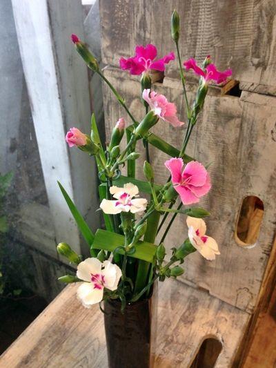 背の高い花瓶には、お花も背を高く生けて玄関に置いてみては♪