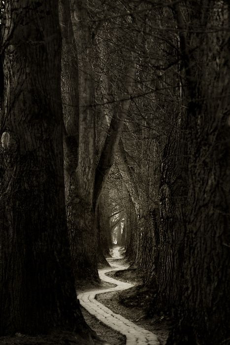 Don't go into the dark woods alone!