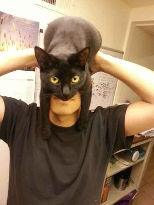 Meet Catman.
