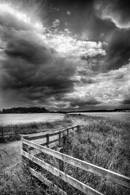 Barley Field, Dornoch,Scotland. Photo by geoffrey skerratt -- National Geographic Your Shot