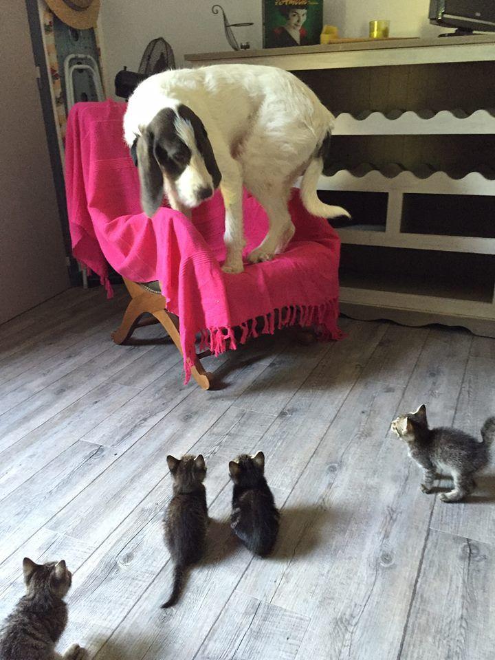 Der große Hund ist nach oben geflüchtet, vor diesen winzig mini kleinen Mieze-Kätzchen. Oh Schreck, ist das lustig!