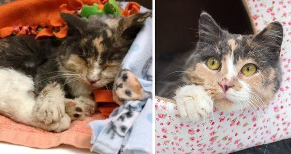 Calico Cat Found Frozen To The Ground Brought Back To Life And Eager To Be Loved With Images Calico Cat Cats Animal Activism