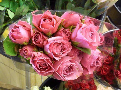 růžové růže (70 pieces)