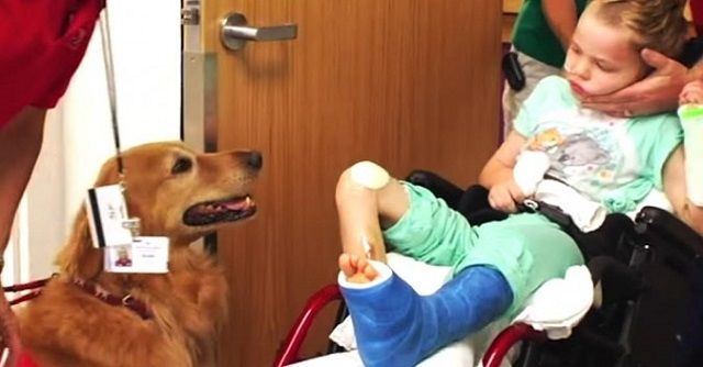 This paralyzed child met a dog. What happened a month later will leave you speechless
