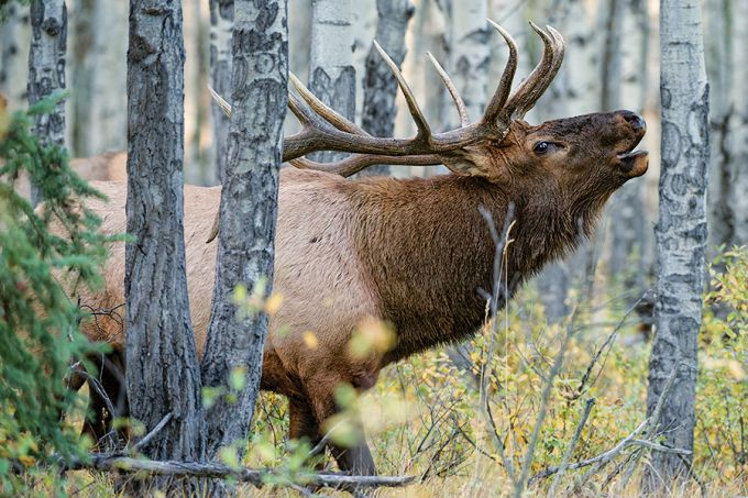 7 Elk Hunting Experts On Cutting Edge Tips and Tactics Elk hunting might be tougher than it used to be, but that doesn't mean you can't kill a big bull on public land. Here's how these experts get it done season after season.