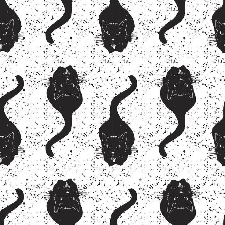 Wallpaper Cat Black And White