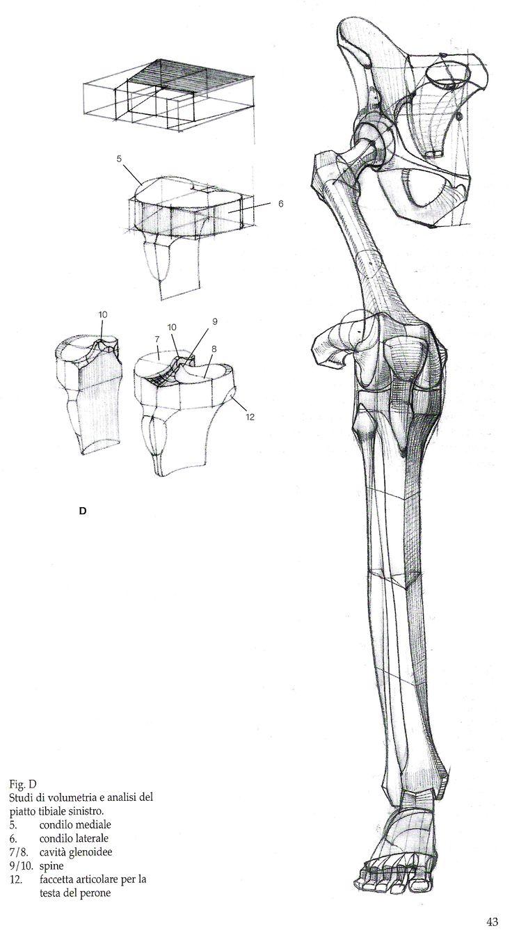 Character Design Harvard : 인체 뼈 구조에 관한 개의 최상의 pinterest 이미지 인간 해부학 참고 자료 및 강좌