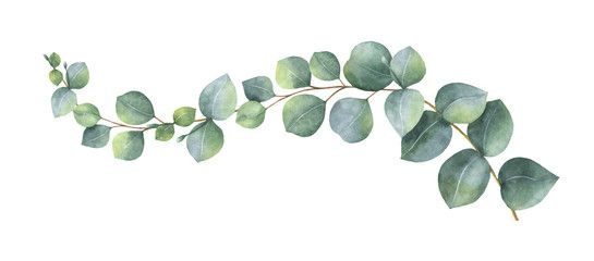 Watercolor Vector Wreath With Green Eucalyptus Leaves And Branches Aquarell Bl 228 Tter