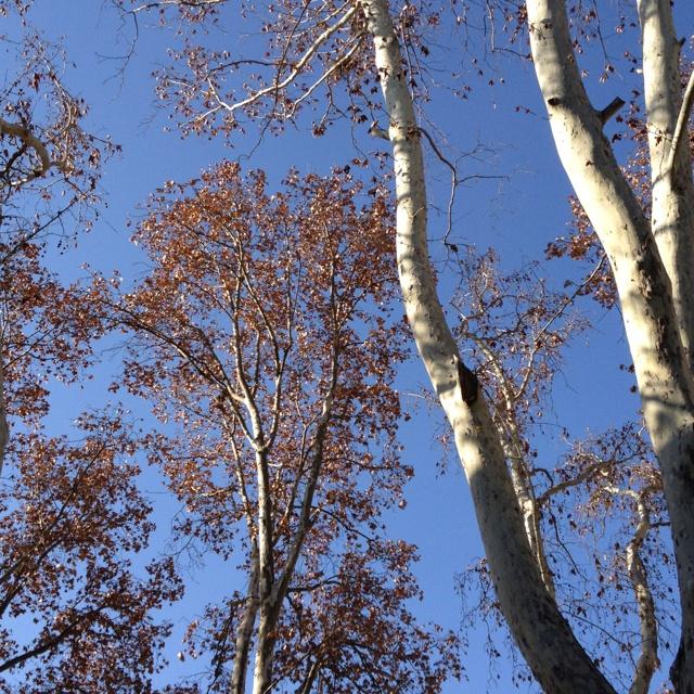 Autumn day in Jozi