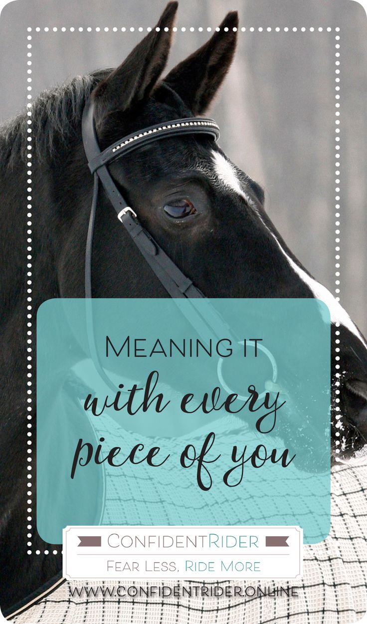 """Have you ever been in the position where something wasn't quite happening with your horse- for the sake of example, let's pretend that you were having trouble nailing a transition, or your horse was refusing a jump- only to have your trainer, instructor or friend jump on and """"get it"""" on the first attempt?  What is that? Aside from quite annoying!"""