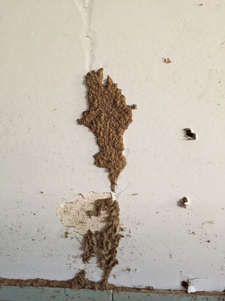 Note The Progression Of Termite Infestation Culminating In