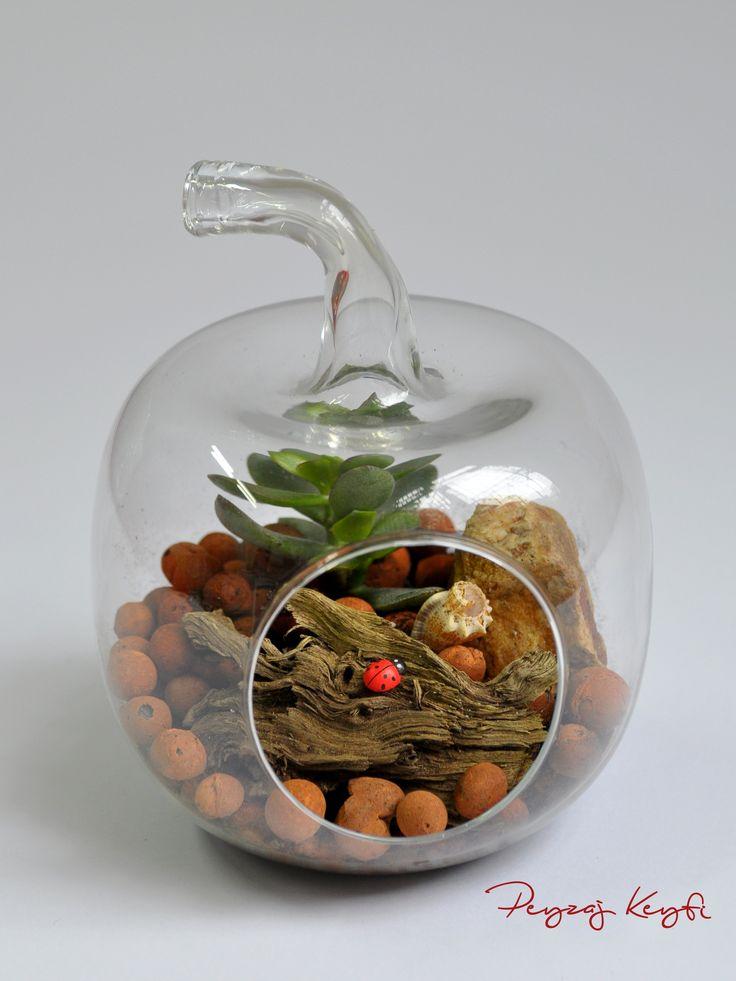 Terrarium - elma formlu