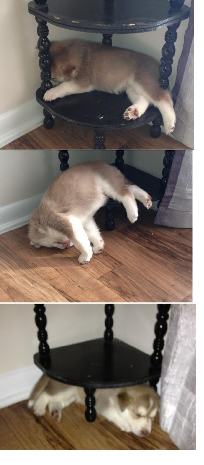 husky puppy in different sleeping positions