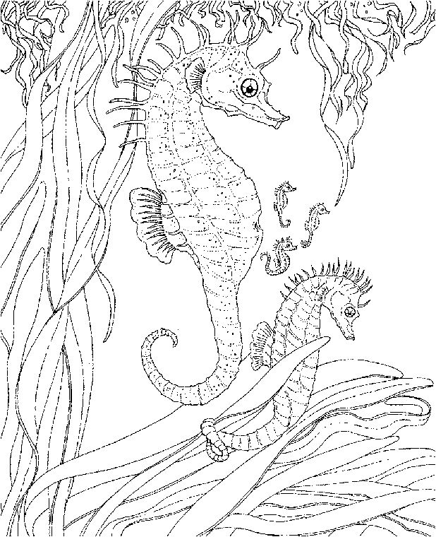 free sea life animals coloring pages coloring pages for adults pinterest coloring. Black Bedroom Furniture Sets. Home Design Ideas