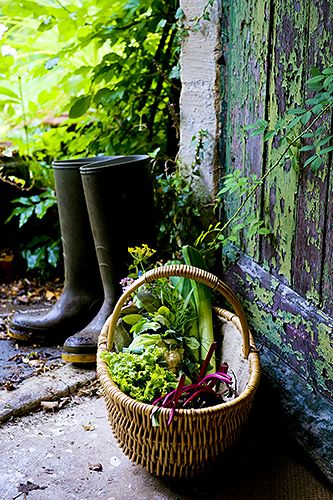 *I've picked my veggies for the day, now to plant my seedlings next and then I'll bring in some pretty flowers.................