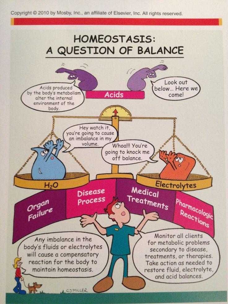 Homeostasis: A question of Balance | Nursing | Pinterest