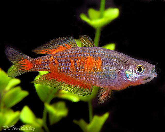 Top 6 best smartest fish freshwater in the world yahoo for Freshwater rainbow fish
