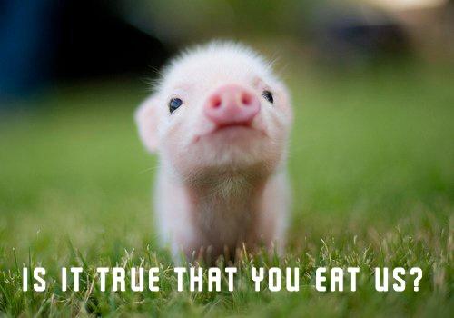 Awww.: Piglets, Little Pigs, Teas Cups, Baby Pigs, Minis Pigs, Teacups Pigs, Piggy, Pet Pigs, Animal