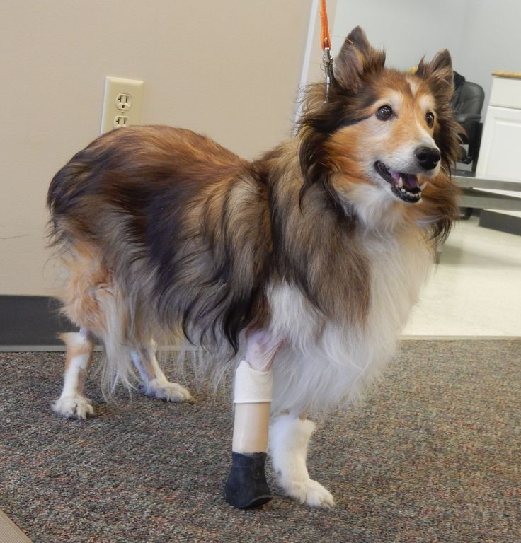 dog prothesis Any ideas for making dog legs prosthesis  i would think the best solution for a dog is to get a veterinarian to implant a screw in the bone of the residual limb,.