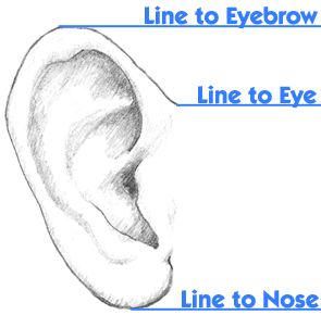 Regardless of the body proportions, drawing realistic ears have a rule of thumb to follow Learn this rule...(remembering that the bottom of the ear varies with each person)...Three rules of thumb that never change is that there are three main basic parts of the ear that are necessary: the outer edge, the inner edge, and the hole leading to the eardrum. If you can get them down on paper, the battle is half done