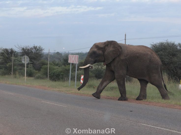 Elephant bull #Dinokeng