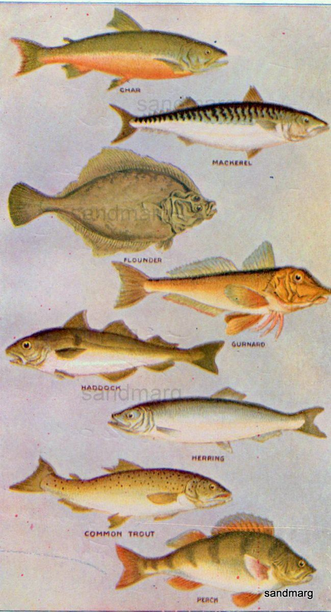 1896 Chart of  Common Fish