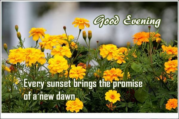 good-evening-quotes-sunset-brings