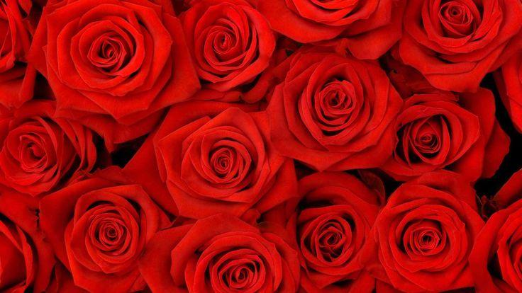 Алые розы сверху