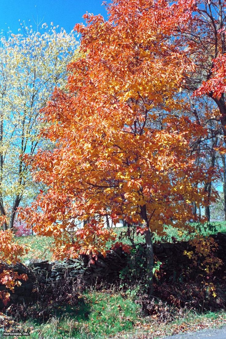 Flowers you can plant in the fall - 346 Best Gardening Trees Images On Pinterest Garden Trees Garden Ideas And Shrubs