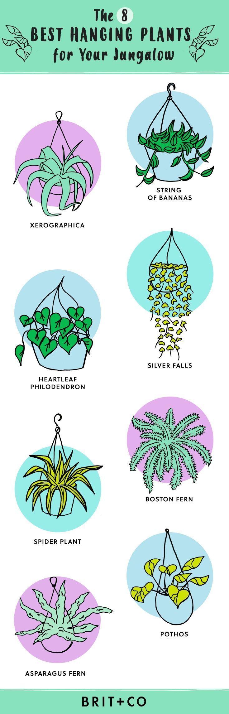 Dieser Leitfaden für hängende Zimmerpflanzen hilft Ihnen bei der Auswahl des besten Grüns für Ihren Raum