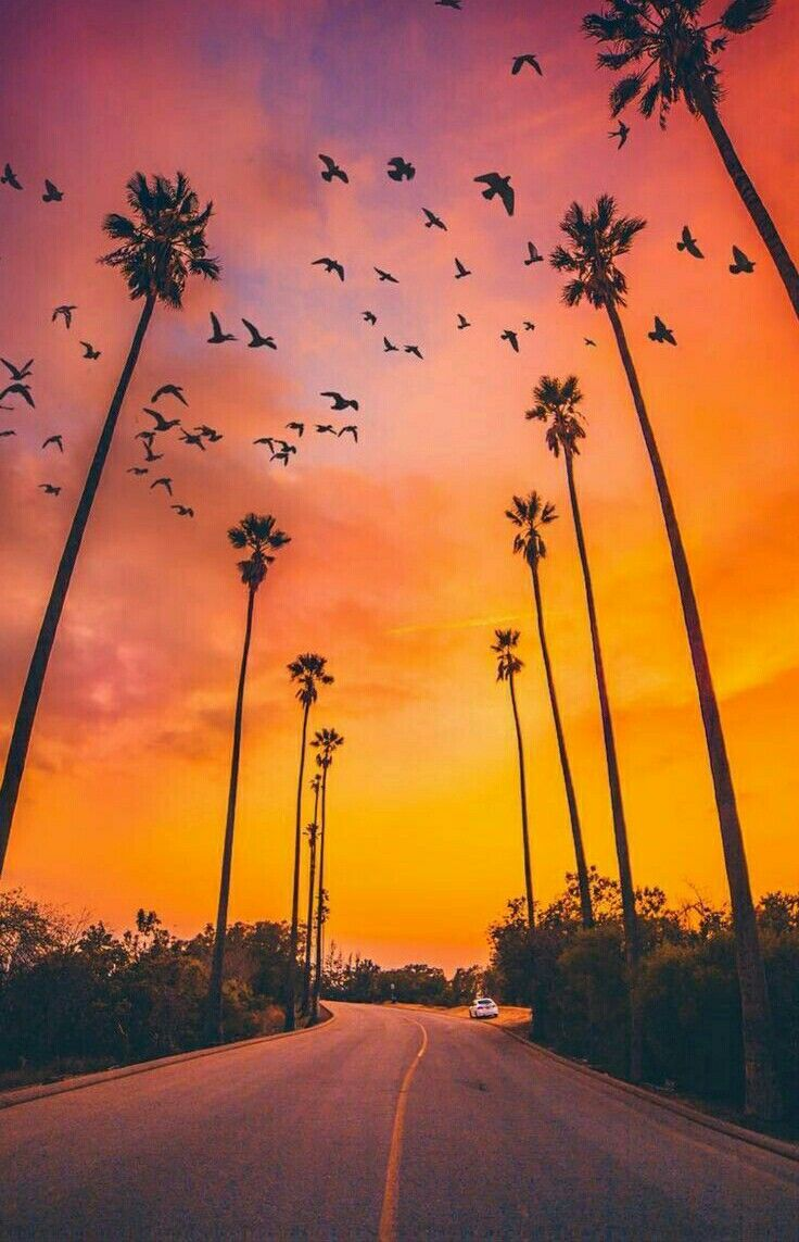 Pin By Brandy Owens On Sunsets Sunrises The Sky Palm Trees Wallpaper Nature Iphone Wallpaper Nature Backgrounds Iphone