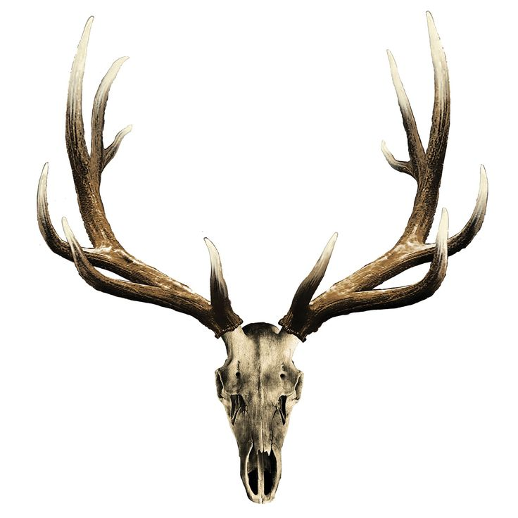 Elk skull drawing - photo#1