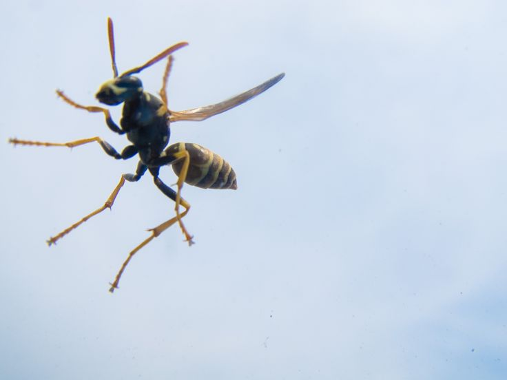 A wasp on my car glass. Alive, and tryin' to not fly away!