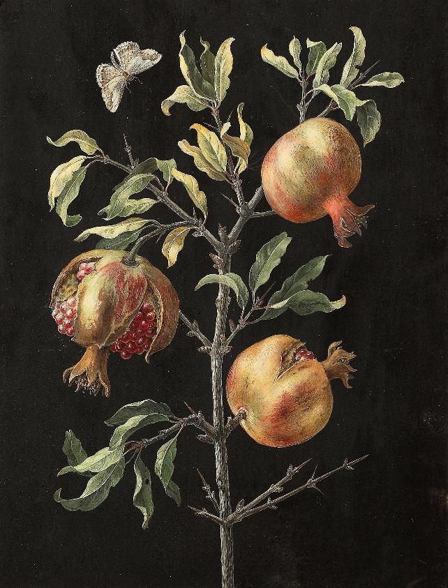 Barbara Regina Dietzsch -  Antique botanical plate