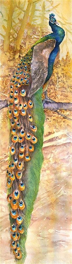 Art - title 'Proud Peacock' Watercolor Painting on paper. - by artist Ruth Glenn Little