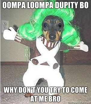 LOL!  If I ever had this costume my poor dog would totally be in it!