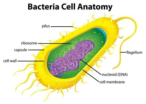 Bacterial Cell Parts - Biology101 Study Guides