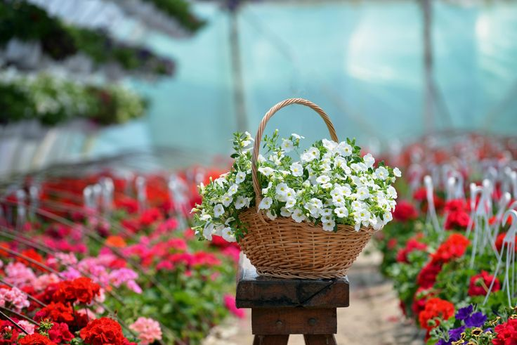 Flower Baskets And Stands - Marta