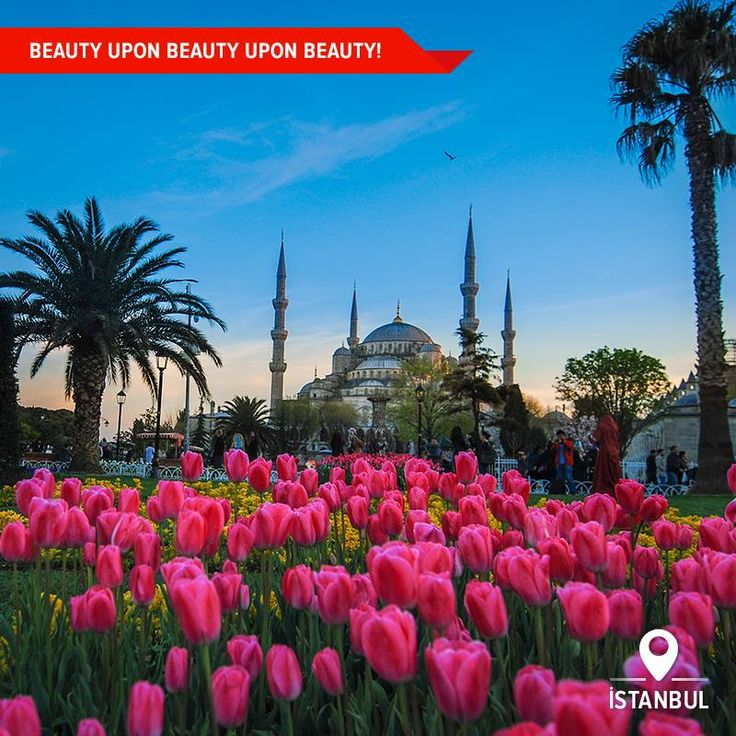 The view of blossoming tulips will make your walk up to the magnificent Blue Mosque even more stunning this spring – Can you imagine a city with millions of flowers? Visit Istanbul this spring!