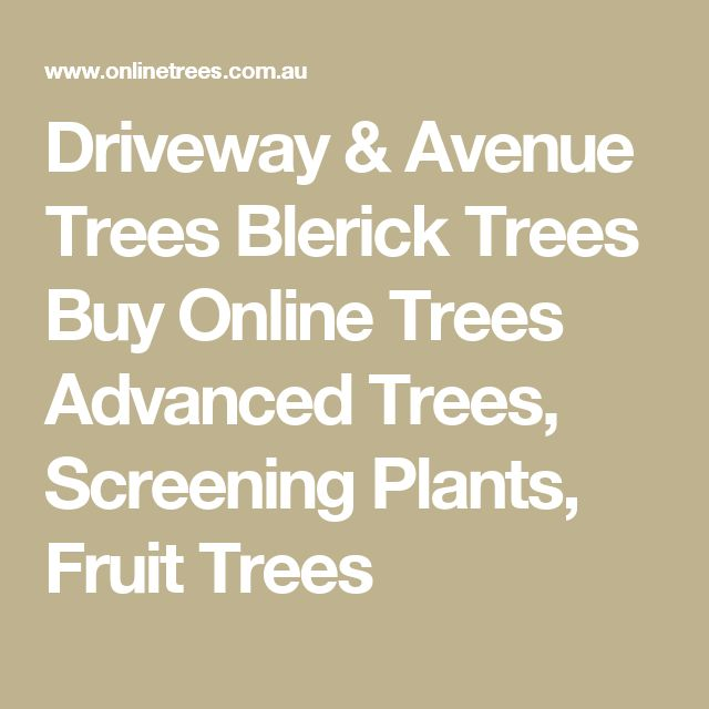 Driveway & Avenue Trees Blerick Trees Buy Online Trees Advanced Trees, Screening Plants, Fruit Trees