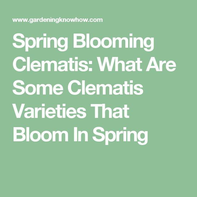 Spring Blooming Clematis: What Are Some Clematis Varieties That Bloom In Spring