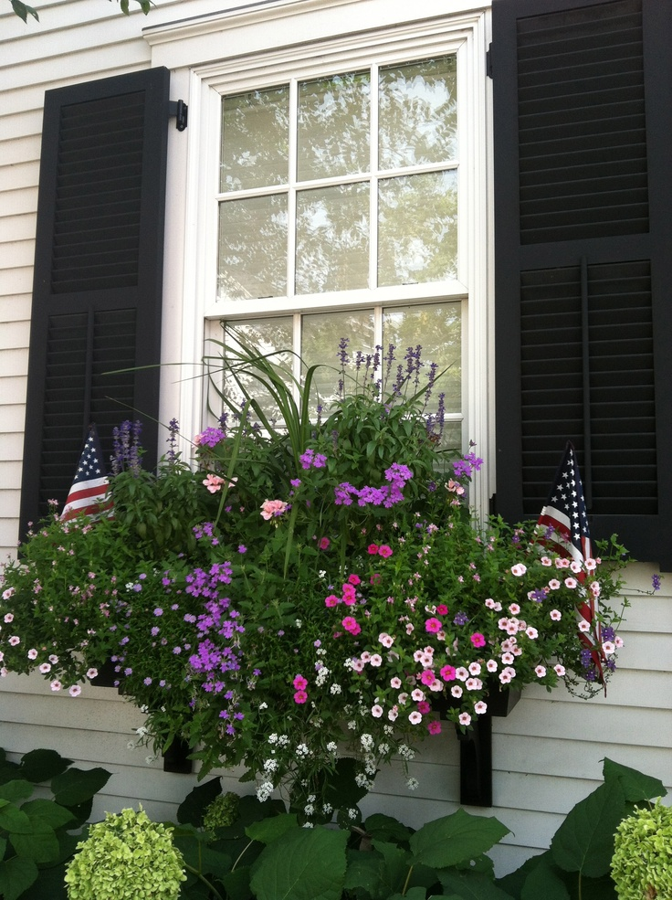 141 best images about window box ideas on pinterest window boxes geraniums and blue shutters. Black Bedroom Furniture Sets. Home Design Ideas