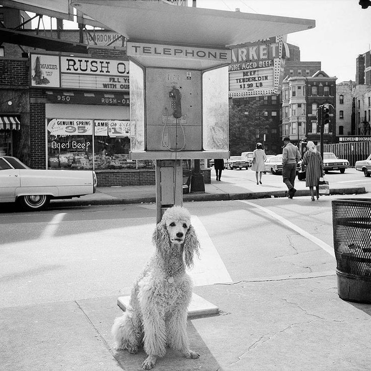 Vivian Maier...Poodle on the streets of Chicago. 1960s. :)