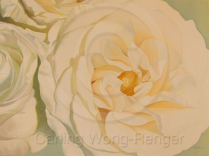 """Illuminance White Roses by Carling Wong-Renger, Oil on canvas, 36 X 36"""""""