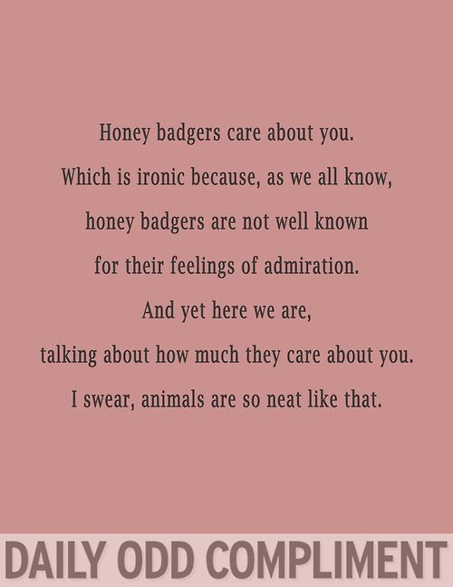 Honey Badgers care about you. Which is ironic because, as we all know, Honey Badgers are not well known for their feeling of admiration. And yet here we are, talking about how much they care about you. I swear, animals are so neat like that. (Daily Odd Compliment)