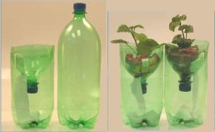 Soda Bottle Hydroponics Experiments For Kids Science