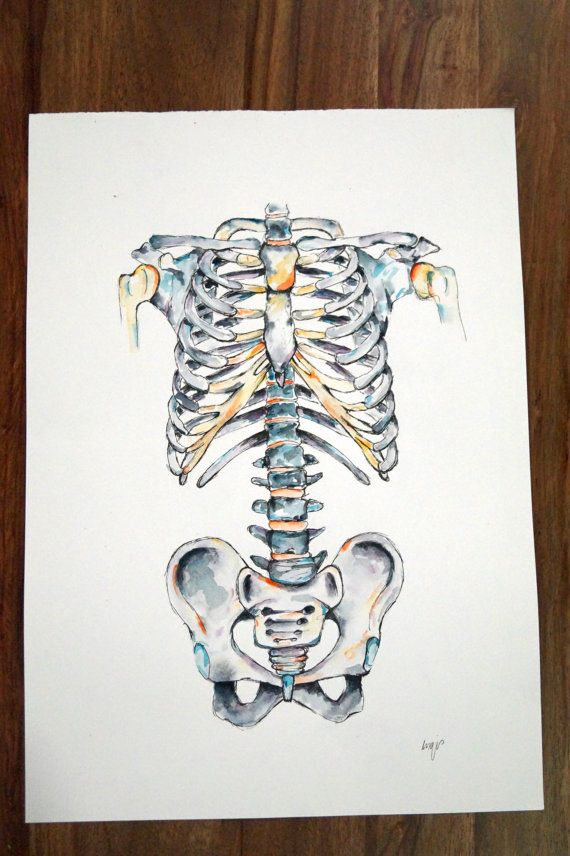 Acuarela anatomía arte esqueleto Axial por AlmostAnatomical