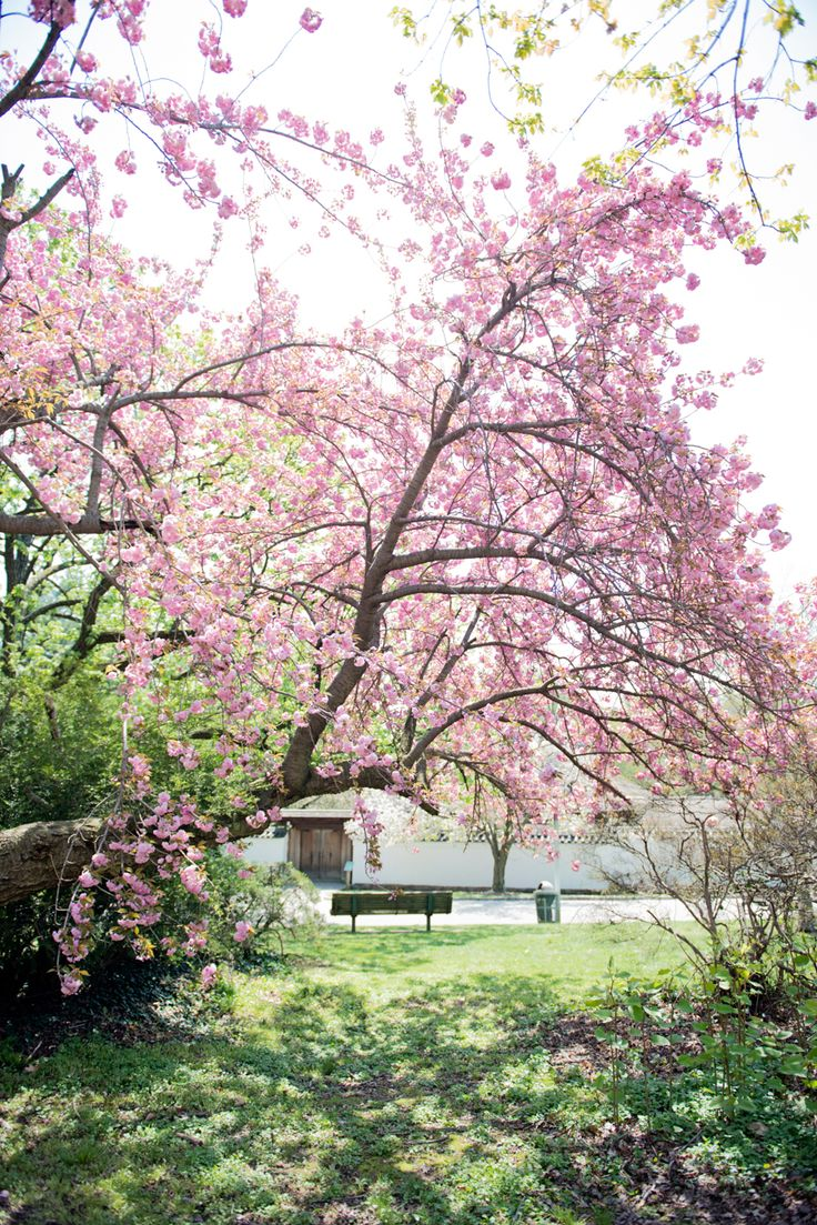 49 best horticultural center wedding philadelphia pa