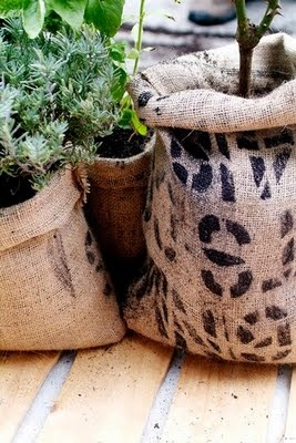 Plantas en sacos