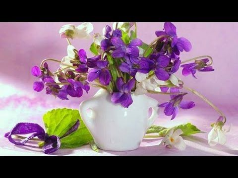 Beautiful Violets  ( Relaxing music )